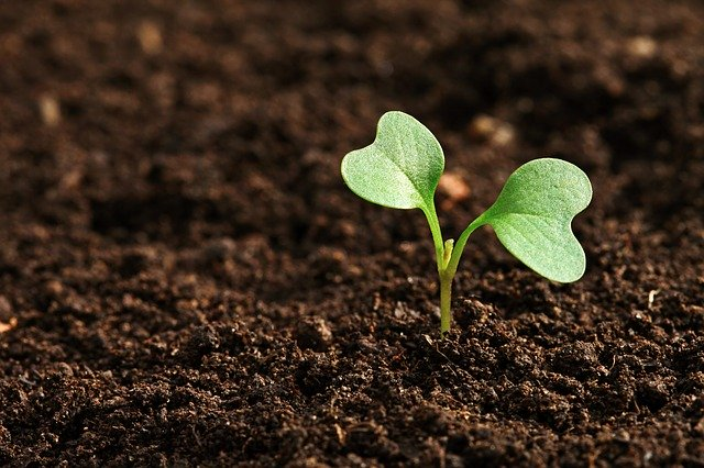 Travailler la terre avec precision pour une bonne levee des semis agricoles